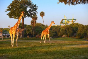 Adventures at Tampa Bay Busch Gardens | RTX Traveler Magazine