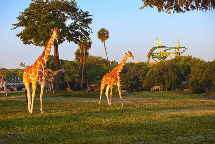 Adventures at Tampa Bay Busch Gardens RTX Traveler Magazine