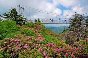 A Nature Lover's Dream | Grandfather Mountain | RTX Traveler Magazine