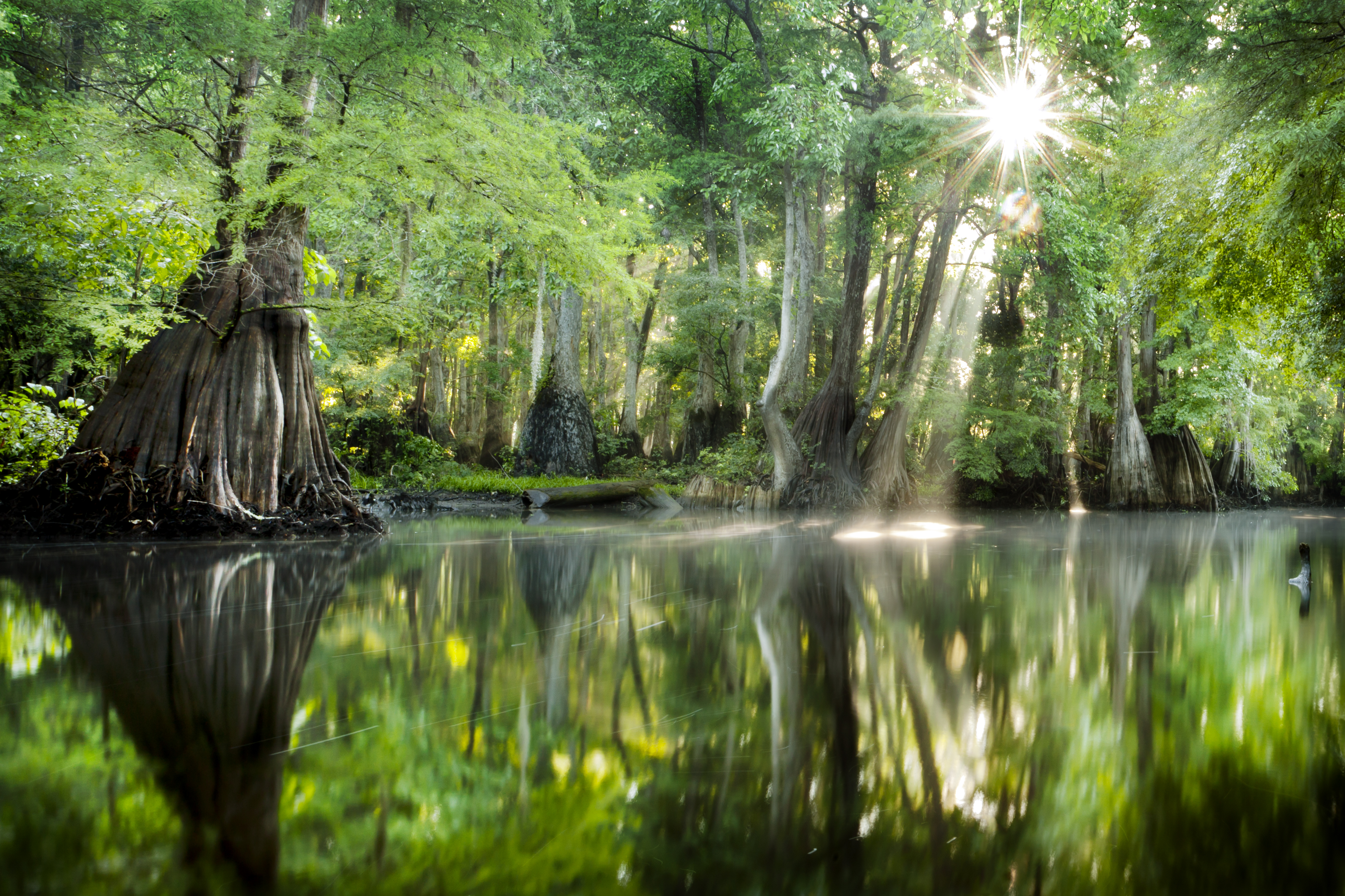 Hilton Head Island Back To Nature Rtx Traveler Online
