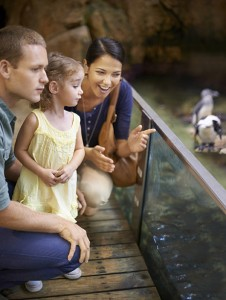Cropped shot of a family looking at penguins at an aquarium
