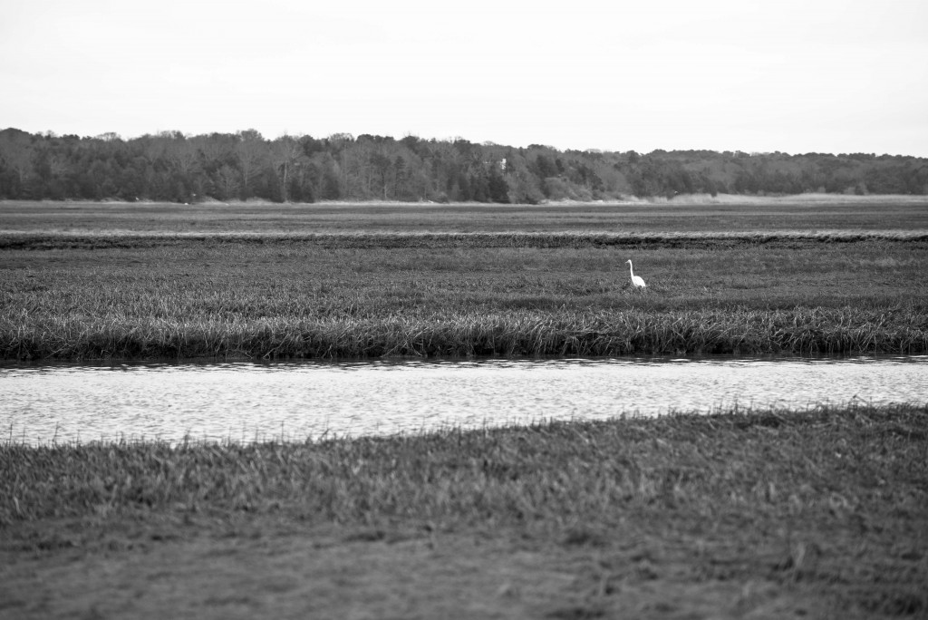Nauset Marsh, viewed from the Fort Hill Trail on the Cape Cod National Seashore.