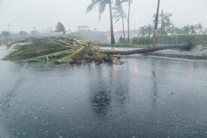 As the Cleanup Process Begins, We're Reminded Everyone is Affected by Hurricanes