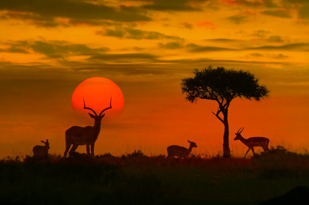 African sunset with silhouette
